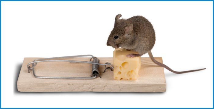 rodent control pest control