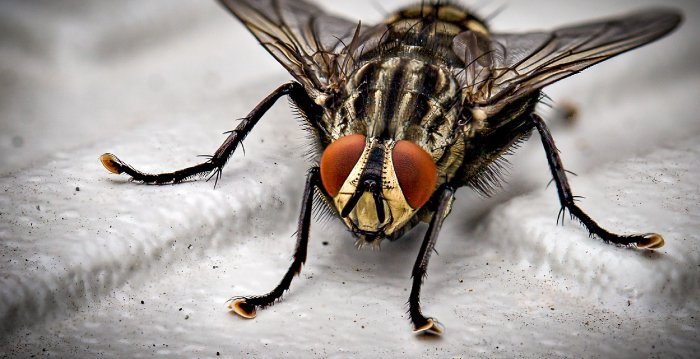 HHS-FlyingInsects