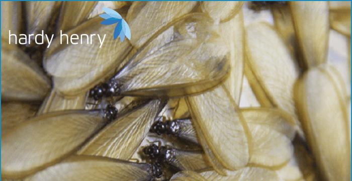 carias pest control mauritius termites