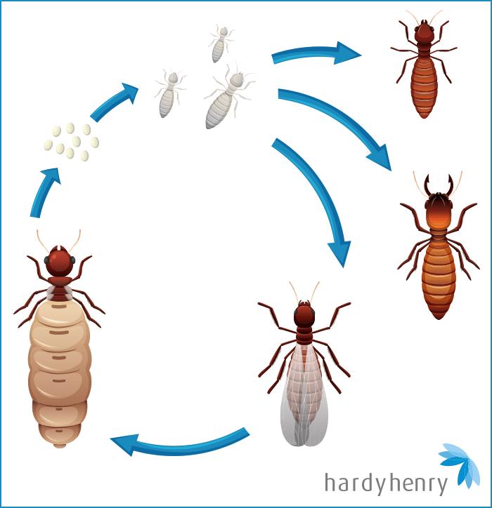 carias termites pest control mauritius