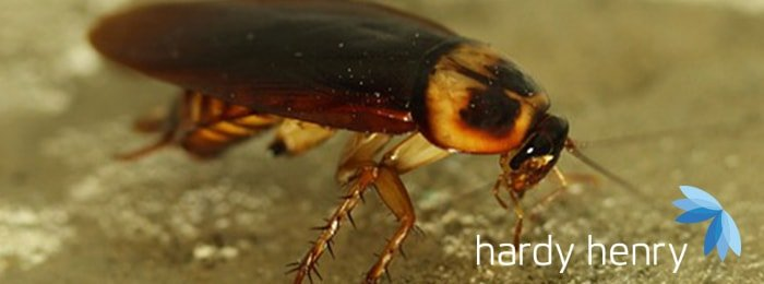 Hardy Henry Services - Cockroaches - Pest Control