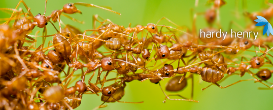 7 myths about pests to forget in 2020