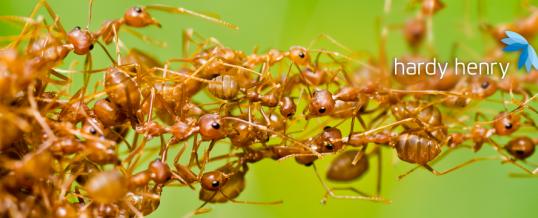 7 mythes sur les parasites à oublier en 2020
