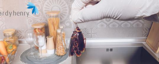 5 Tips to keep pests away